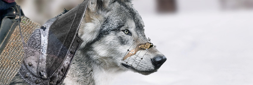 paste and wrap around wolfs muzzle