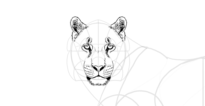 draw the tiger ears