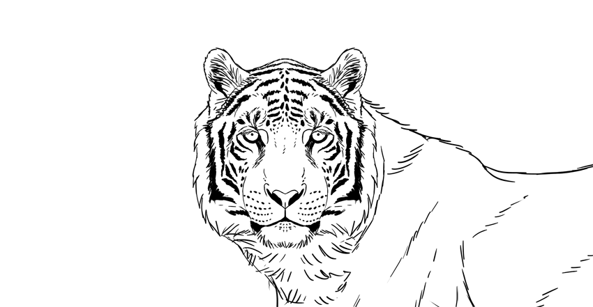 Draw stripes on tigers head