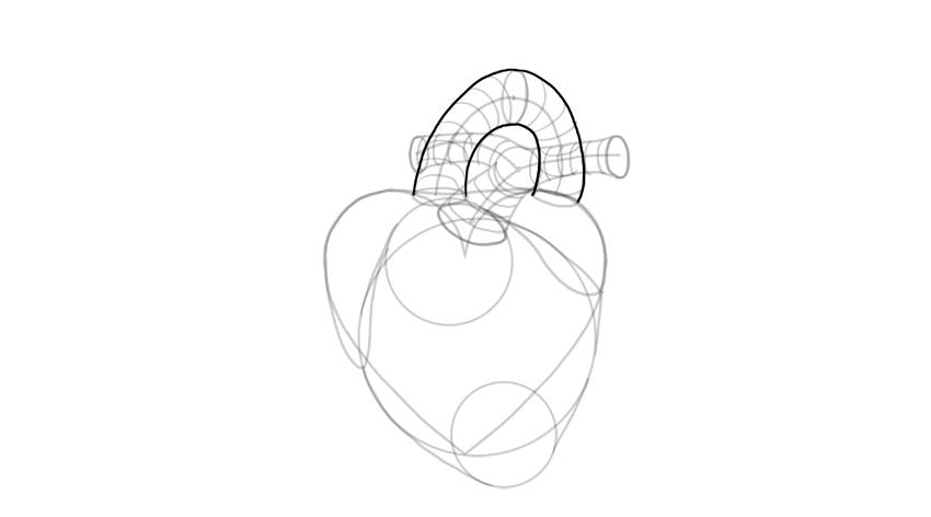 outline aorta