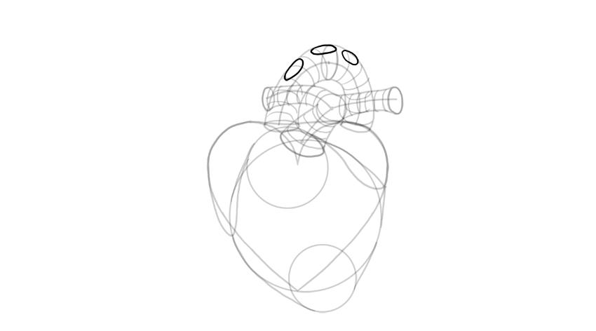 dibujar detalles de la aorta