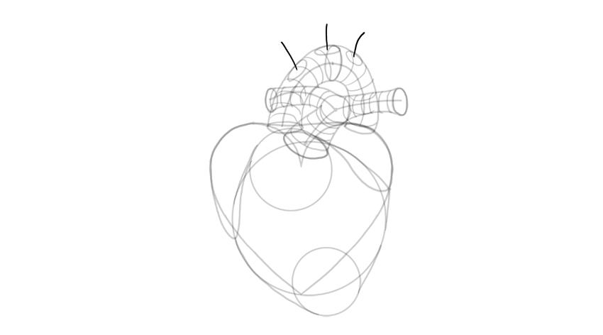 dibujar ramificación de la aorta