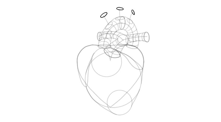 dibujar las aberturas de la ramificación de la aorta