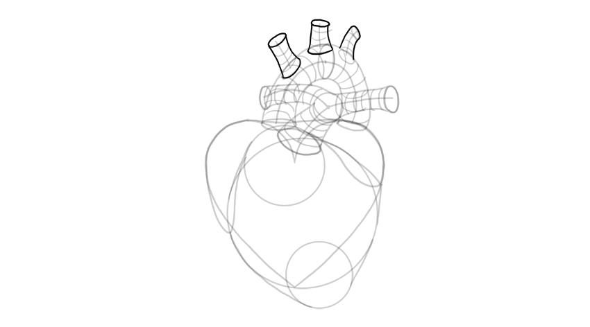 finsih the aorta
