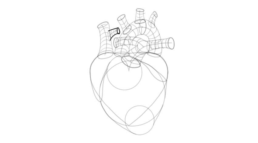 draw outline of branching vena cava