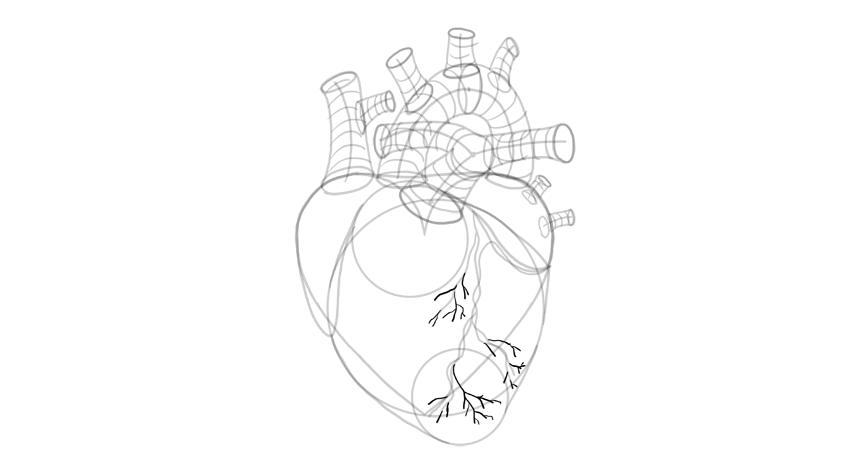dibujar los vasos sanguíneos
