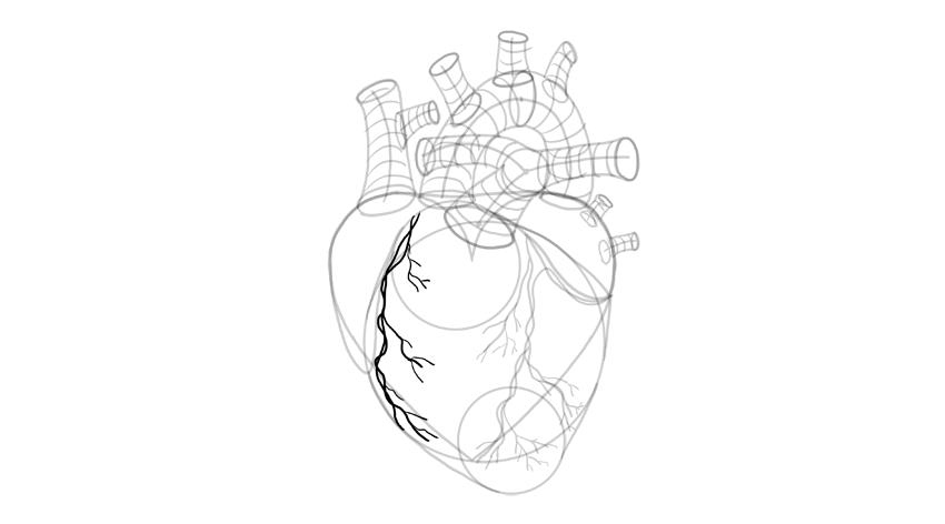 how to draw a heart Interactive Heart Diagram vessels finish blood vessels