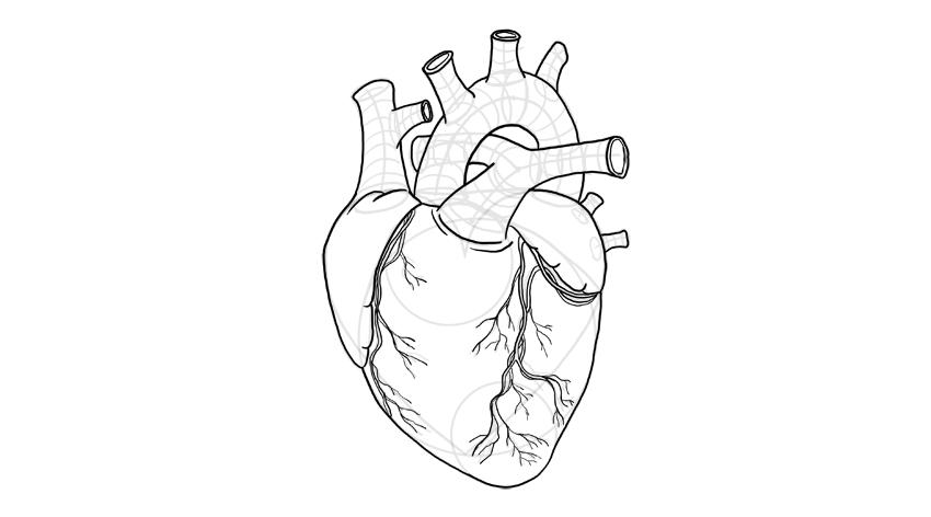 dibujar vasos sanguíneos detallados