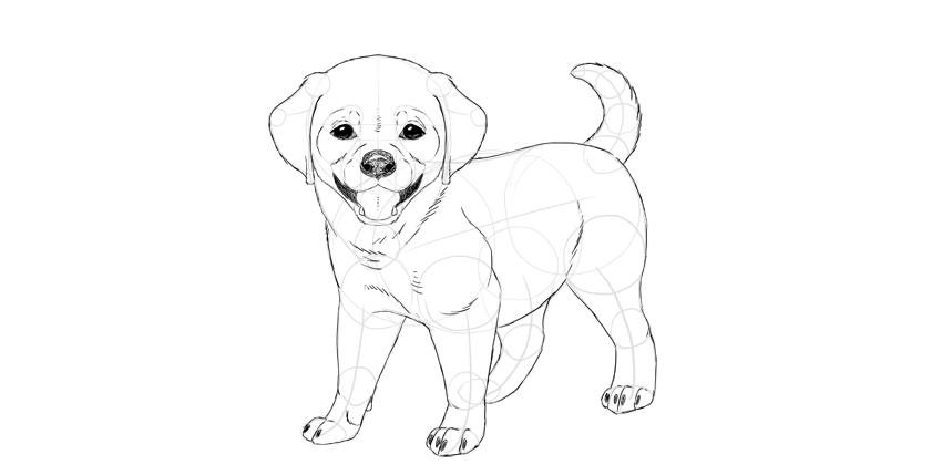 puppy drawing. puppy darken details How to Draw a Puppy
