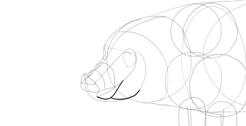 draw pig lower jaw