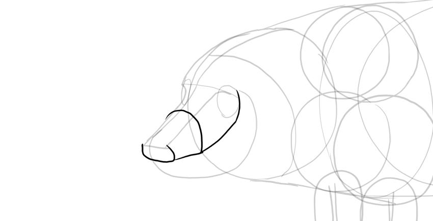 draw pig upper jaw