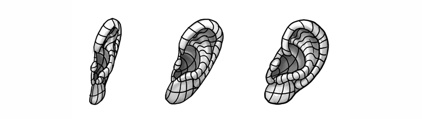ear form rotated views