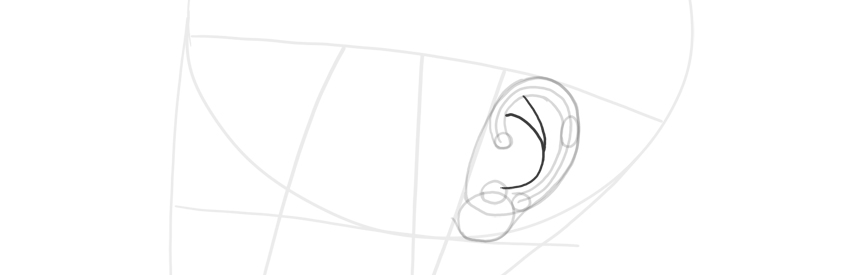 ear side view antihelix