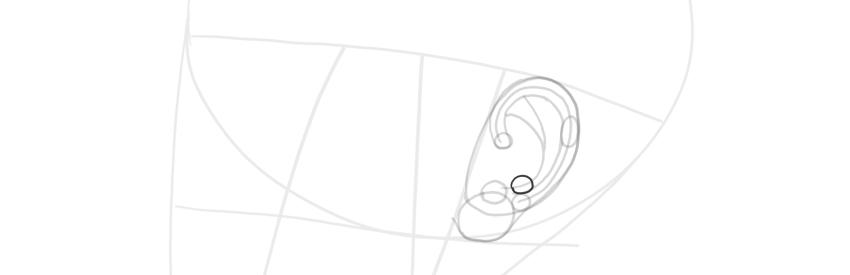 ear side view antihelix width