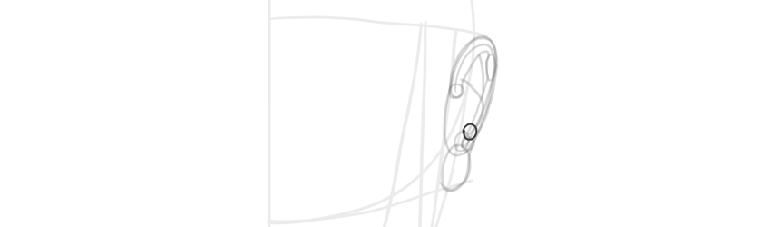 ear front view antihelix width