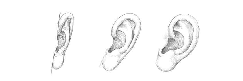 how to draw ears step by step anatomy
