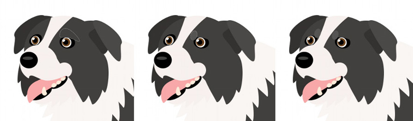 how to create vector dog eyebrows