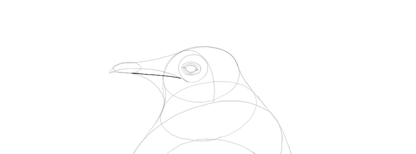 add beak detail