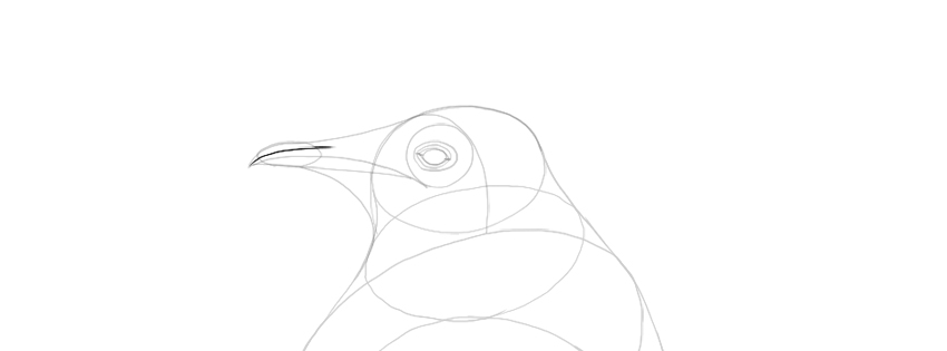 penguin beak drawing