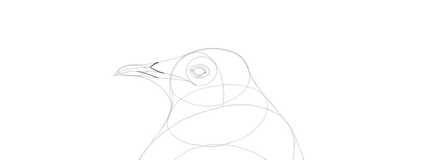 how to draw a beak