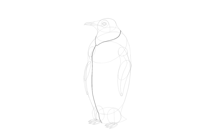 sketch depth of penguin body