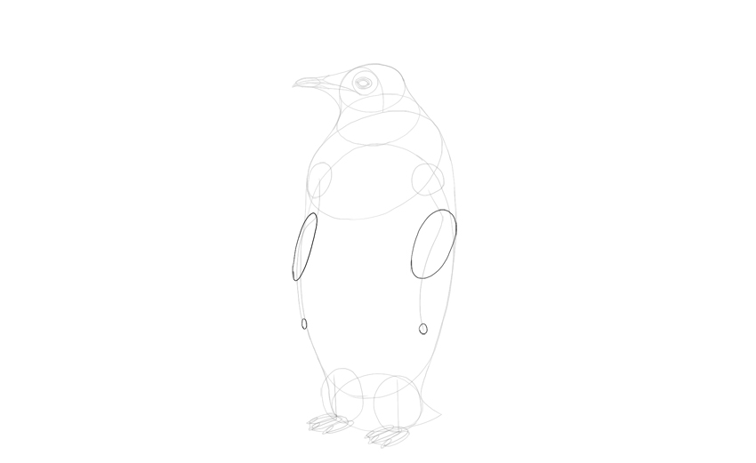 sketch shape of penguin wings