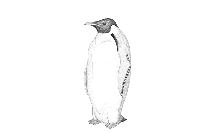 shade penguin body
