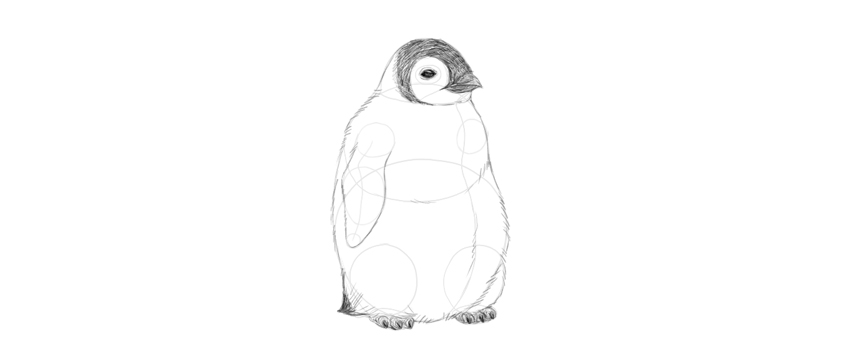 shade baby penguin