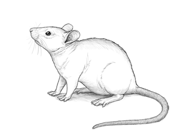 How to draw mouse preview