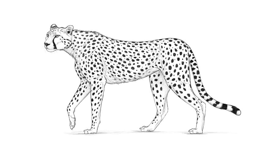 How To Draw A Cheetah Javascript World