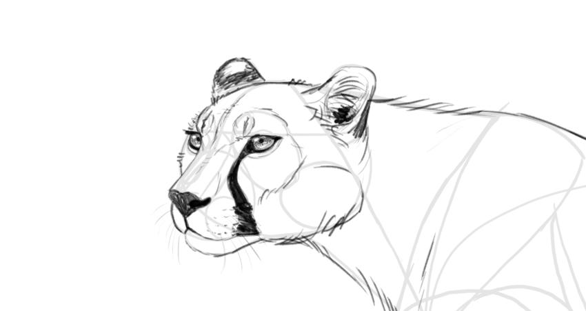 shade the cheetah head
