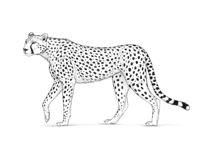 How to draw cheetah preview