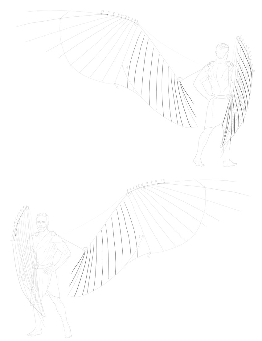 rhythm of secondary feathers