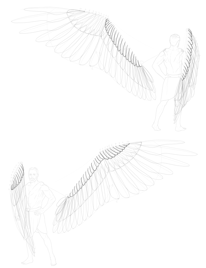 shape of lesser coverts