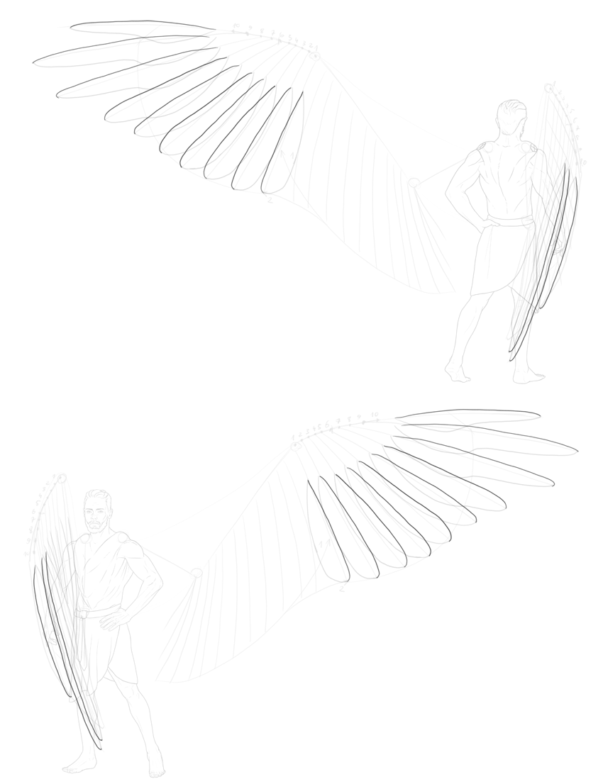 shape of primary feathers