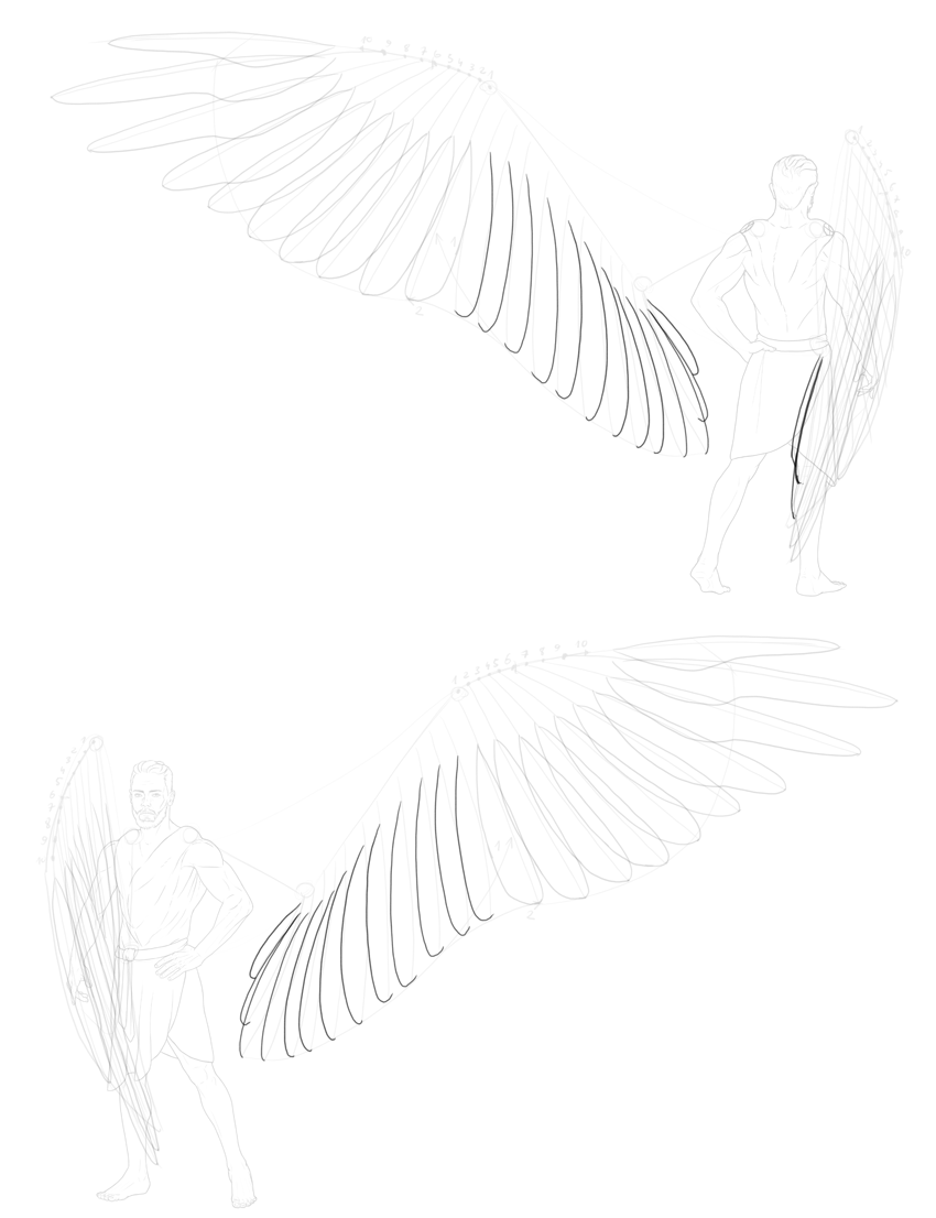 outline of secondary feathers