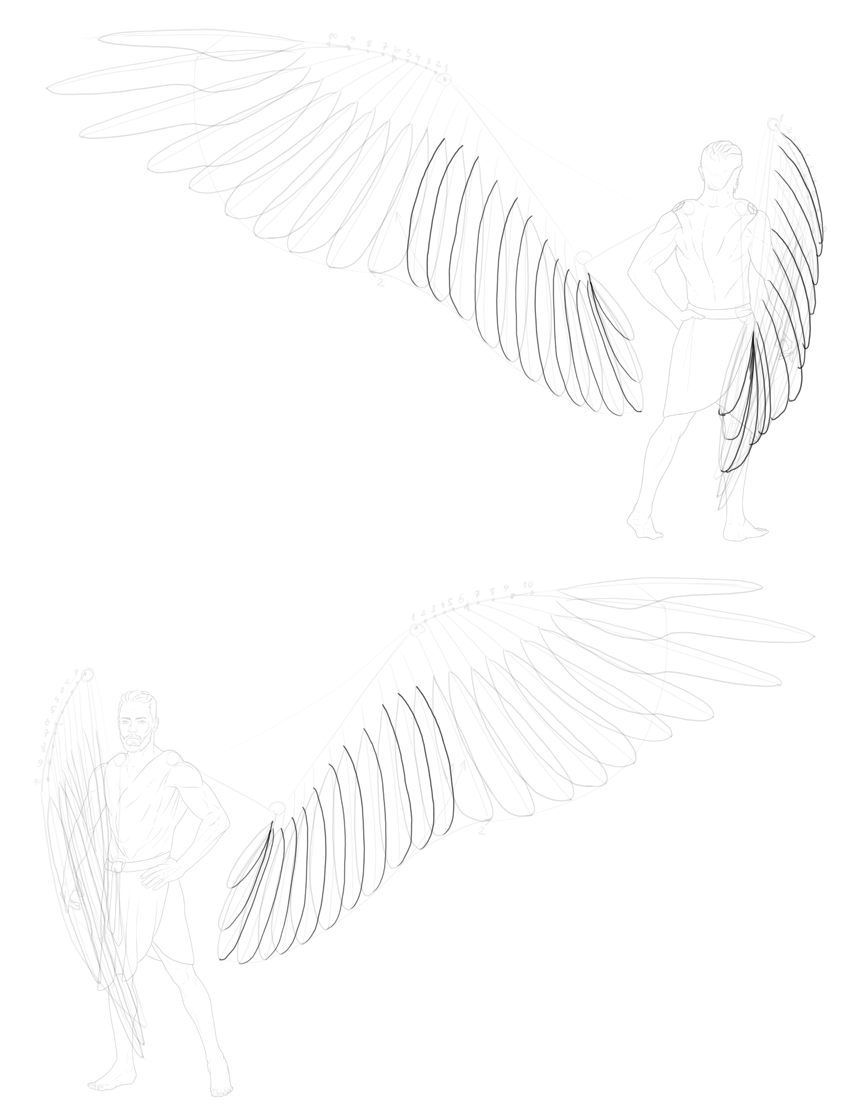 full secondary feathers