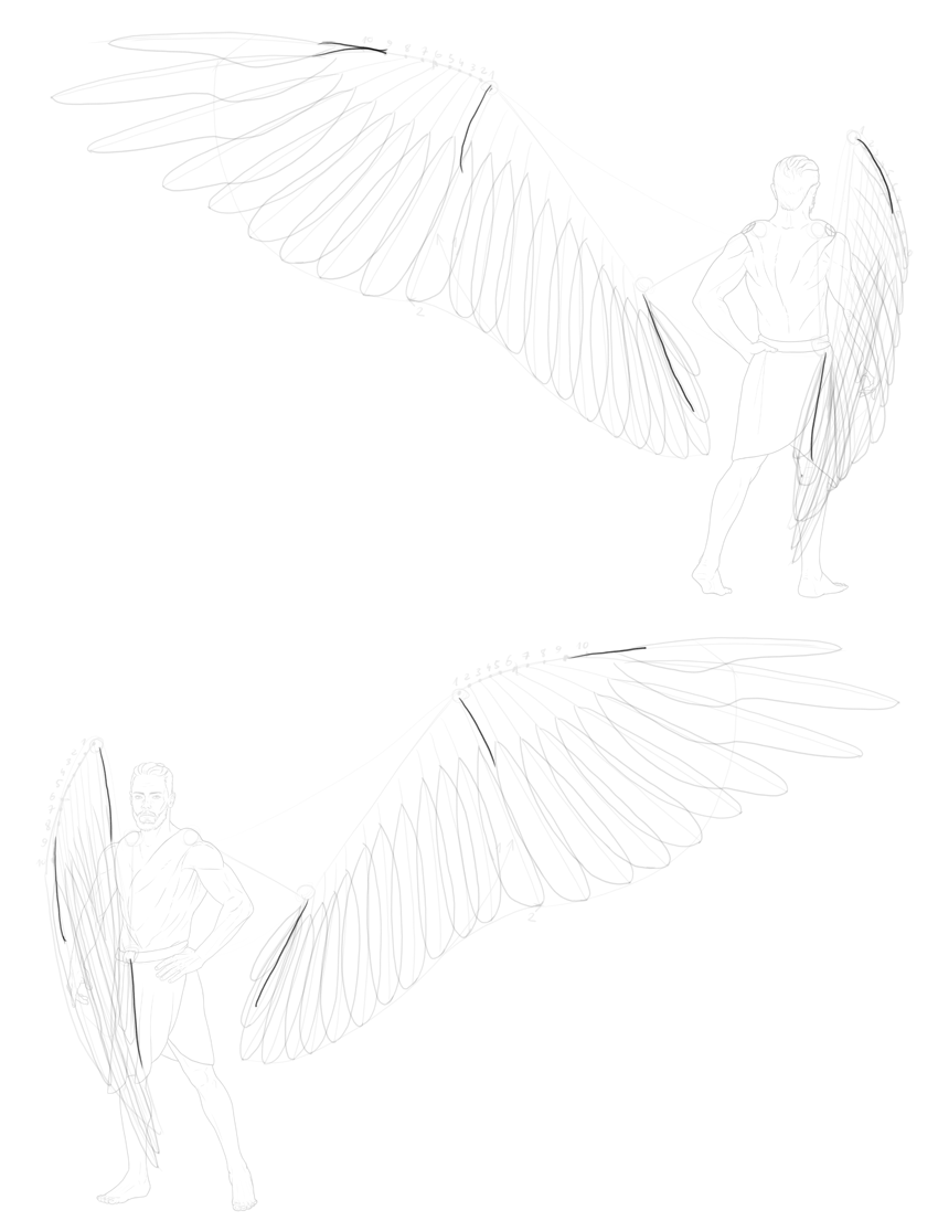 plan of greater coverts
