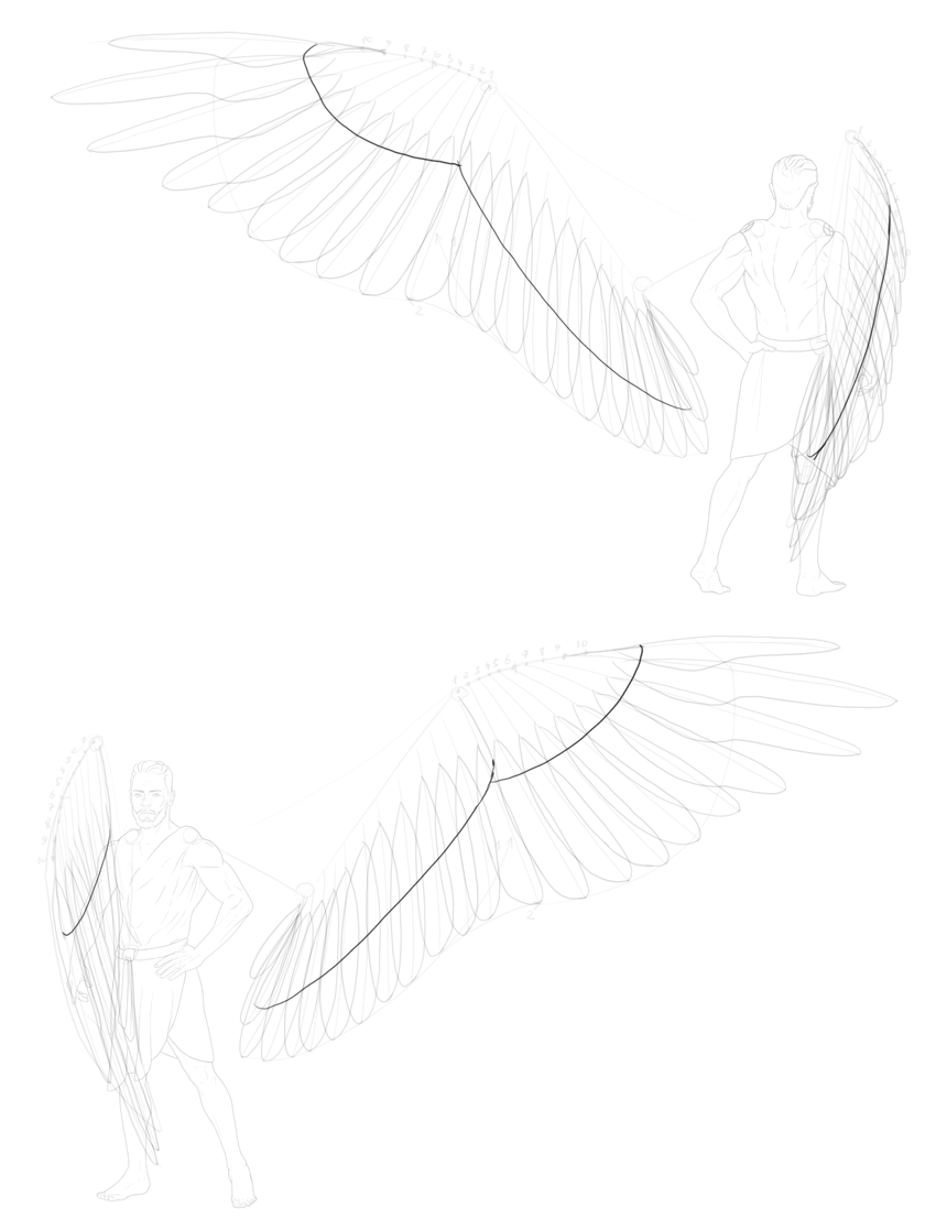 outline of greater coverts