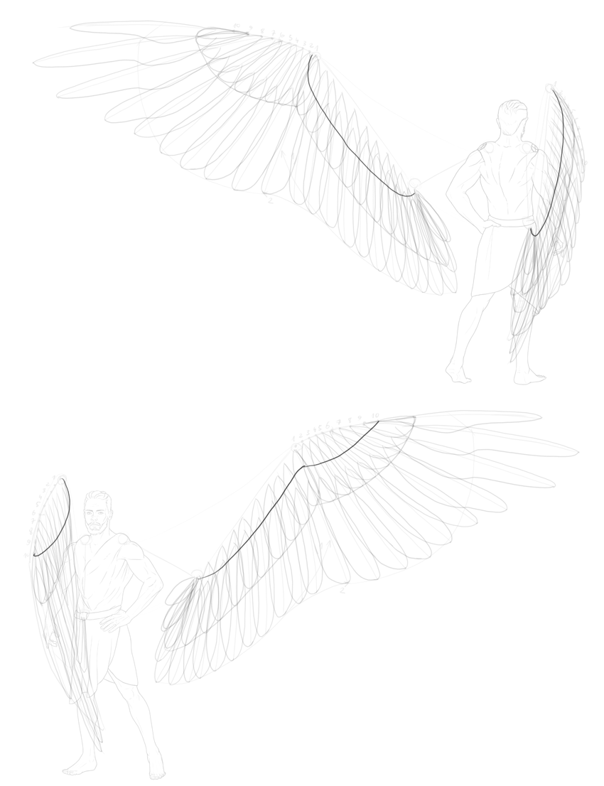 outline of lesser coverts