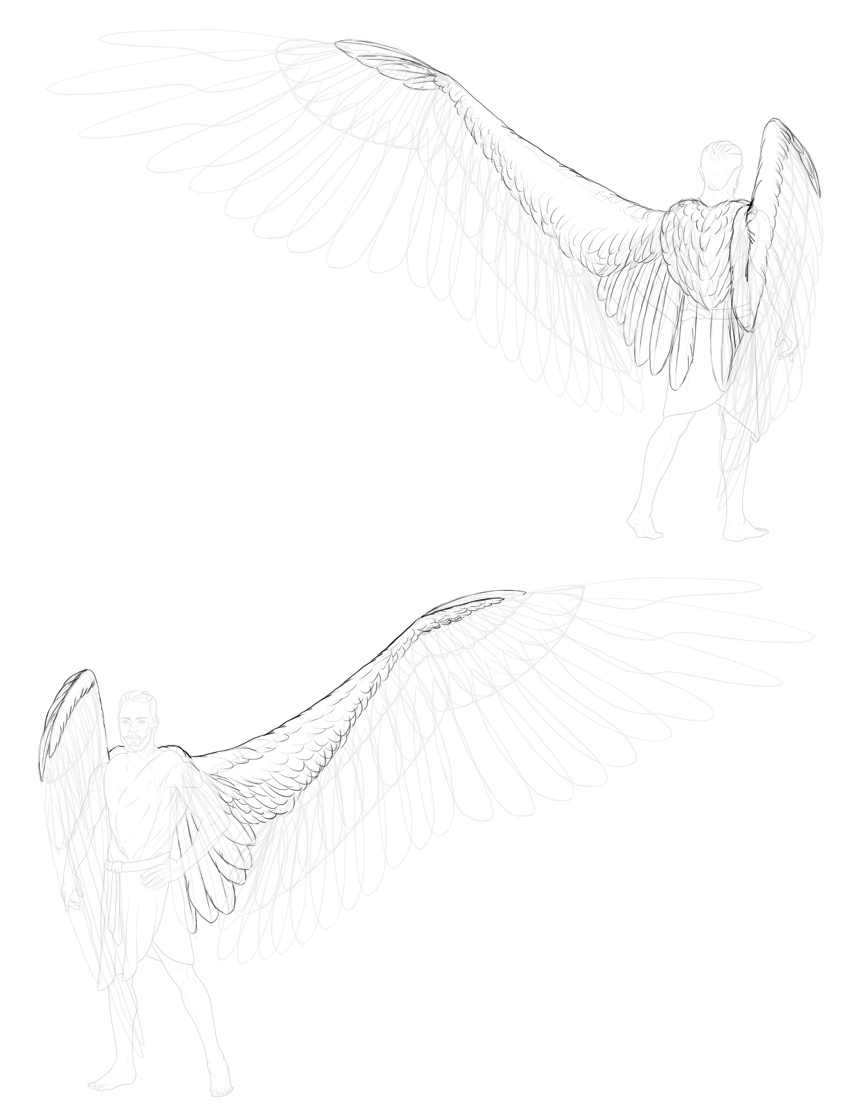 draw alula scapular feathers