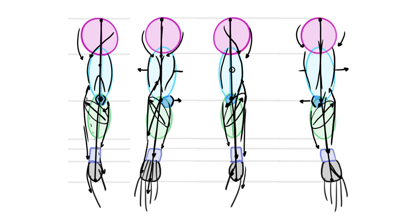 simplified arm muscles diagram