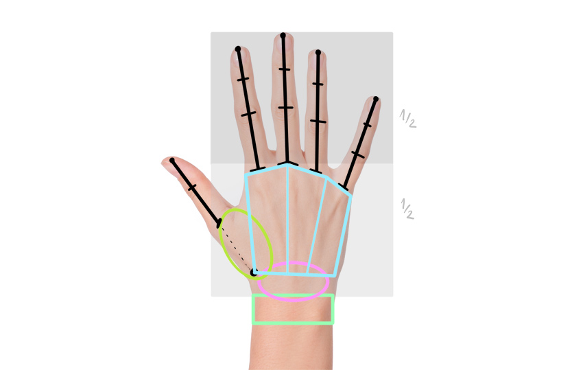 proportions of anime hand