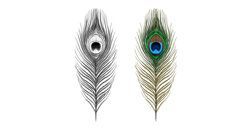 peacock feather colors