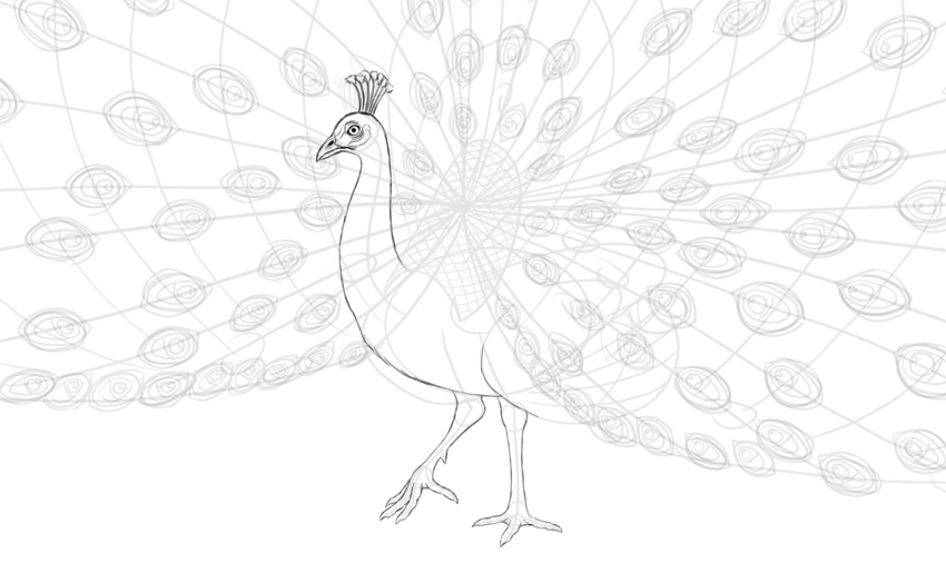 peacock leg details