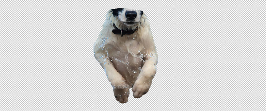select dog body