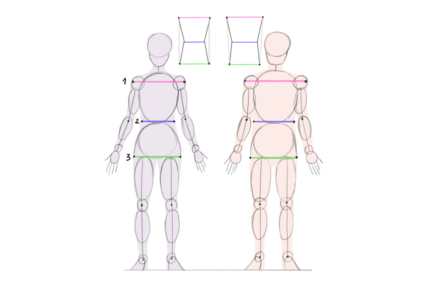 female male proportions comparison