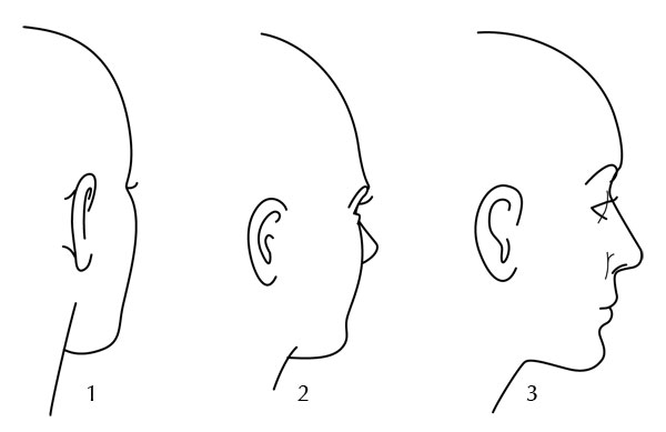Line Drawing Face Profile : Human anatomy fundamentals basics of the face