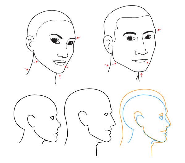 Human Anatomy Fundamentals Advanced Facial Features