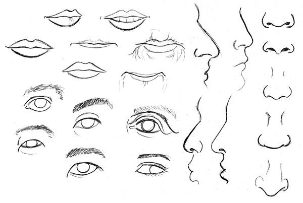 Fundamentos de la Anatomía Humana: Características Faciales Avanzadas.